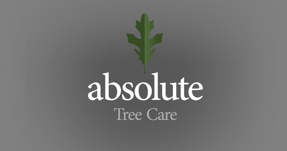 Absolute Tree Care Logo Design
